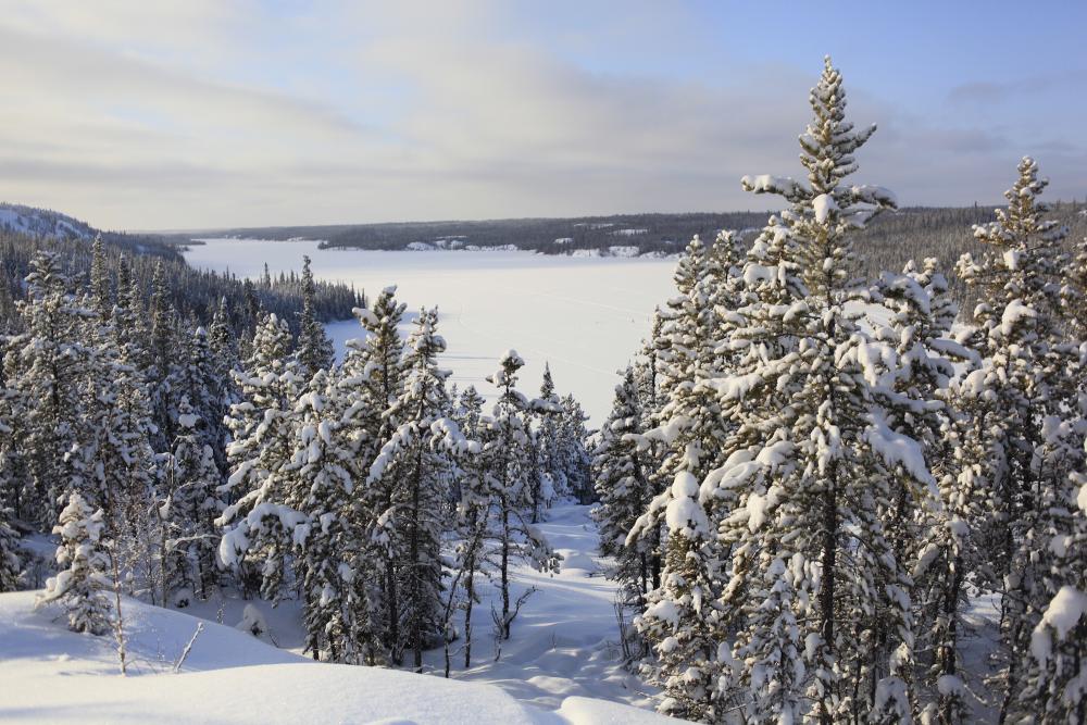 Snow in Trees - Rahela Jagric